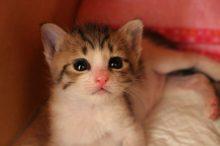 猫アレルギー 検査