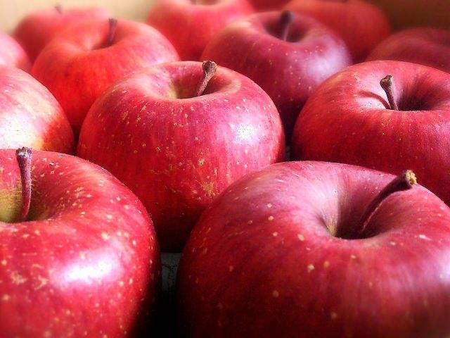 山梨県 りんご狩り