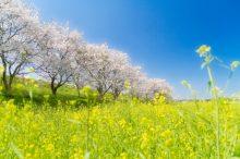 春爛漫 意味