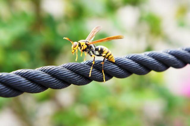 アシナガバチ 刺されたら